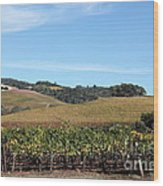 Sonoma Vineyards - Sonoma California - 5d19309 Wood Print