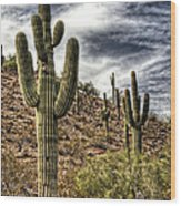 Sonoran Desert II Wood Print