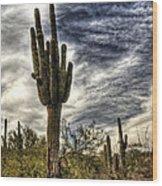 Sonoran Desert Iv Wood Print