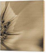 Soprano Purple Daisy Wood Print