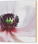Soul Of Poppy Wood Print