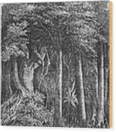 South America: Rubber Wood Print