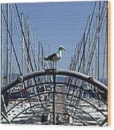 South Beach Seagull Wood Print