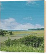 South Carolina Coastal Marsh Wood Print