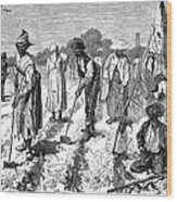 South: Cotton Planting Wood Print by Granger