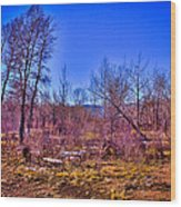 South Platte Park Landscape Wood Print