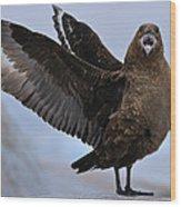 South Polar Skua Wood Print