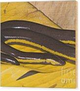 Southeast Asian Caecilian Wood Print