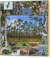 Southeastern Pine Forest Wildlife Poster Wood Print