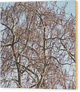 Southern Illinois Calalpa Wood Print
