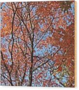 Southern Illinois Maple Wood Print