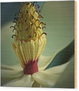 Southern Magnolia Flower Wood Print
