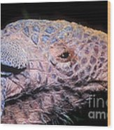 Southern Naked-tail Armadillo Wood Print
