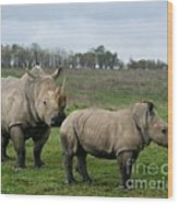 Southern White Rhinos Wood Print