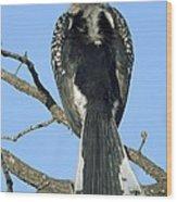 Southern Yellow-billed Hornbill Wood Print