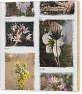 Southwest Wildflower Collection #2 Wood Print
