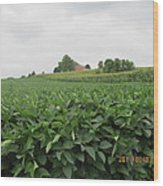 Soy Beans And Red Barn Wood Print