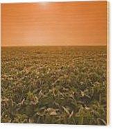 Soybean Field On A Misty Morning Wood Print