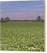 Soybean Field Wood Print by Paolo Negri