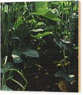 Soybean Leaves Wood Print