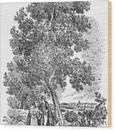 Spain: Orange Tree Wood Print