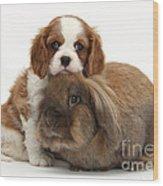 Spaniel Pup With Rabbit Wood Print