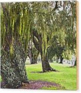 Spanish Moss At Jekyll Island Wood Print