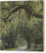 Spanish Moss - D002156 Wood Print