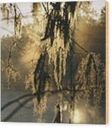Spanish Moss Hanging From A Tree Branch Wood Print