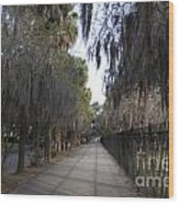 Spanish Moss Sidewalk Wood Print