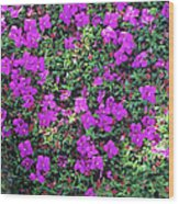 Spanish Shawl Flowers Wood Print