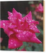 Sparkled Rose Wood Print by Beverly Hammond
