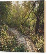 Sparkling Dawn On A Woodland Path Wood Print
