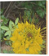 Yellow Bee Plant Sparks Wood Print