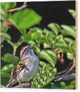 Sparrow 1 Wood Print