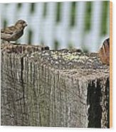 Sparrow And Chipmunk Coexist Wood Print