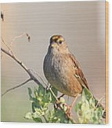 Sparrow Bird Perched . 40d12304 Wood Print