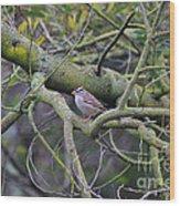 Sparrow Bird Perched . 40d12307 Wood Print