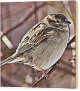 Sparrow II Wood Print