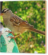 Sparrow In Morning Light  Wood Print