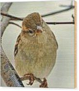 Sparrow On A Twig Wood Print