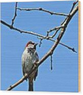 Sparrow On The Branch Wood Print