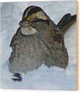 Sparrow V Wood Print