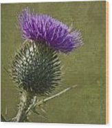 Spear Thistle With Texture Wood Print