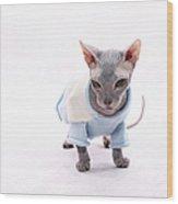 Sphynx Hairless Cat. Wood Print