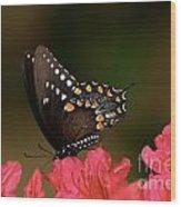 Spice Bush Swallowtail And Azaleas Wood Print by Lara Ellis
