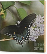 Spice Bush Swallowtail On Lilac Wood Print