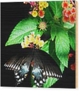 Spice Bush Swallowtail  Wood Print
