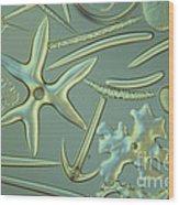 Spicules Of Sponges & Sea Cucumber Lm Wood Print