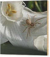 Spider In Narcissus Wood Print